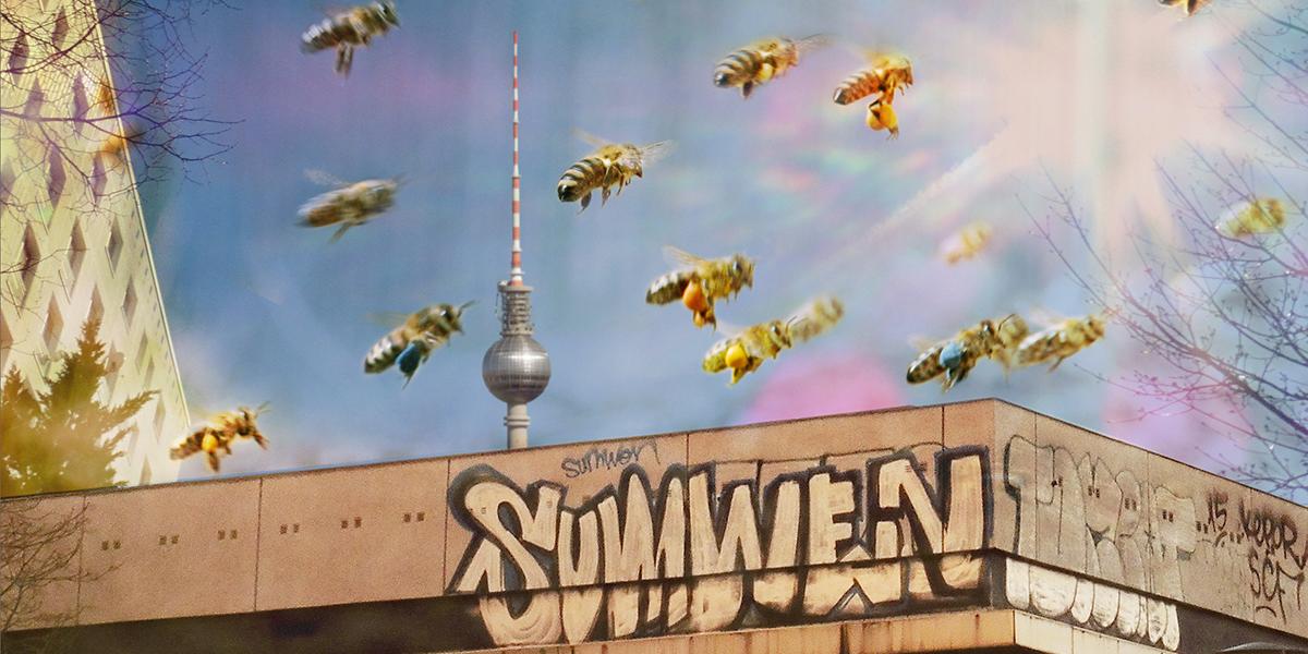 Mellifera Regionalgruppe Berlin – wesensgemäß imkern in Berlin