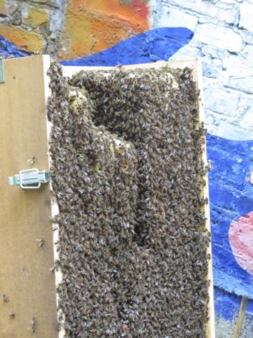 Bienenkiste voller Bienen