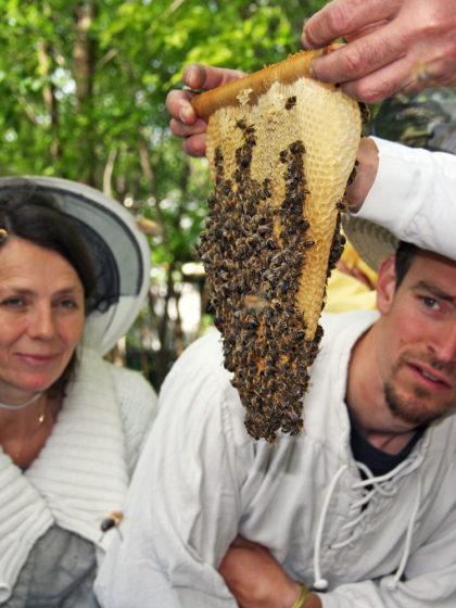 Berlin – Langer Tag der Stadtnatur 2017: Bienenführungen zu wesensgemäßer Imkerei