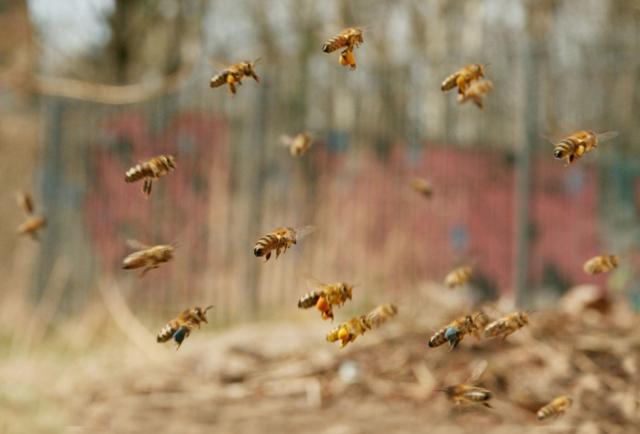 Bienen Silke Meyer salzundhonig