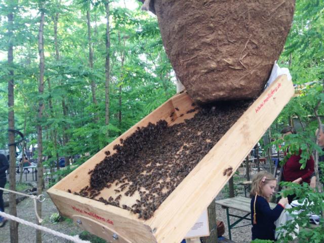 ... und während die Bienen hineinziehen, tauschen wir uns beim Treffen zu allen Vorkommnissen und Besonderheiten der Schwarmzeit aus.