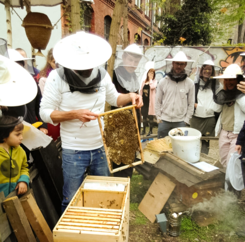 Mellifera Berlin Bienen Kurs Prinzessinnengärten
