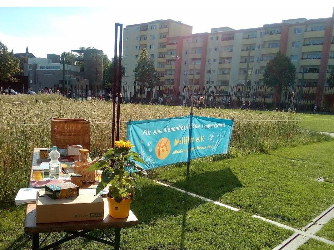Der Bienenstandort am Roggenfeld im Garten Der Versöhnung vor dem Gesumme des Langen Tages.