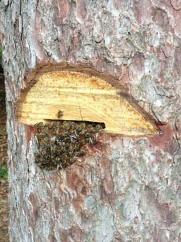 Klotzbeute mit Bienenbart