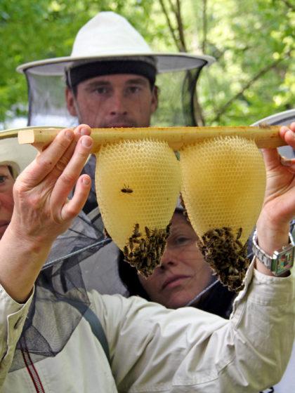 Imkerkurse 2016 zur wesensgemäßen Bienenhaltung der Mellifera Regionalgruppe Berlin
