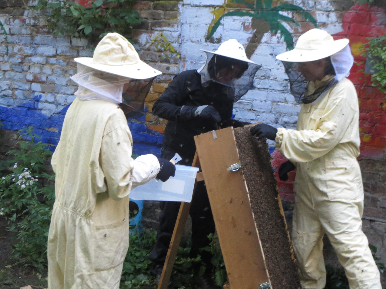 Honigernte an der Bienenkiste.