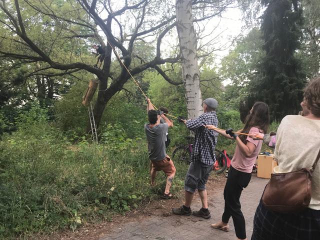 Das Hochziehen der Klotzbeute in den Baum