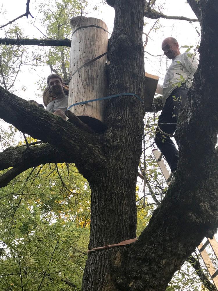 In 4 Meter Höhe im Baum fühlen sich Bienen (und scheinbar auch Menschen) besonders wohl