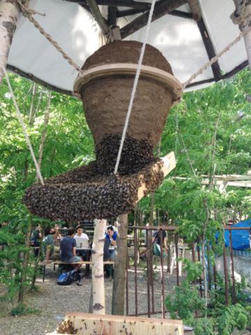 Bienenschwarm Weißenseifener Hängekorb / Sunhive Prinzessinnengarten Berlin