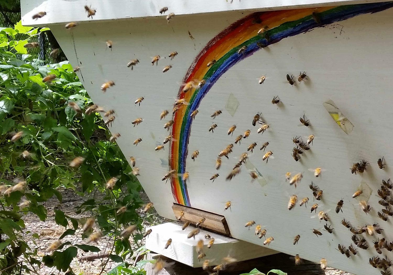 Top-Bar-Hive, Prinzessinengarten
