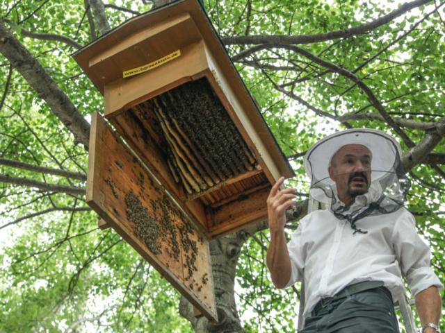 Hängende Bienenkiste geöffnet, Prinzessinnengarten