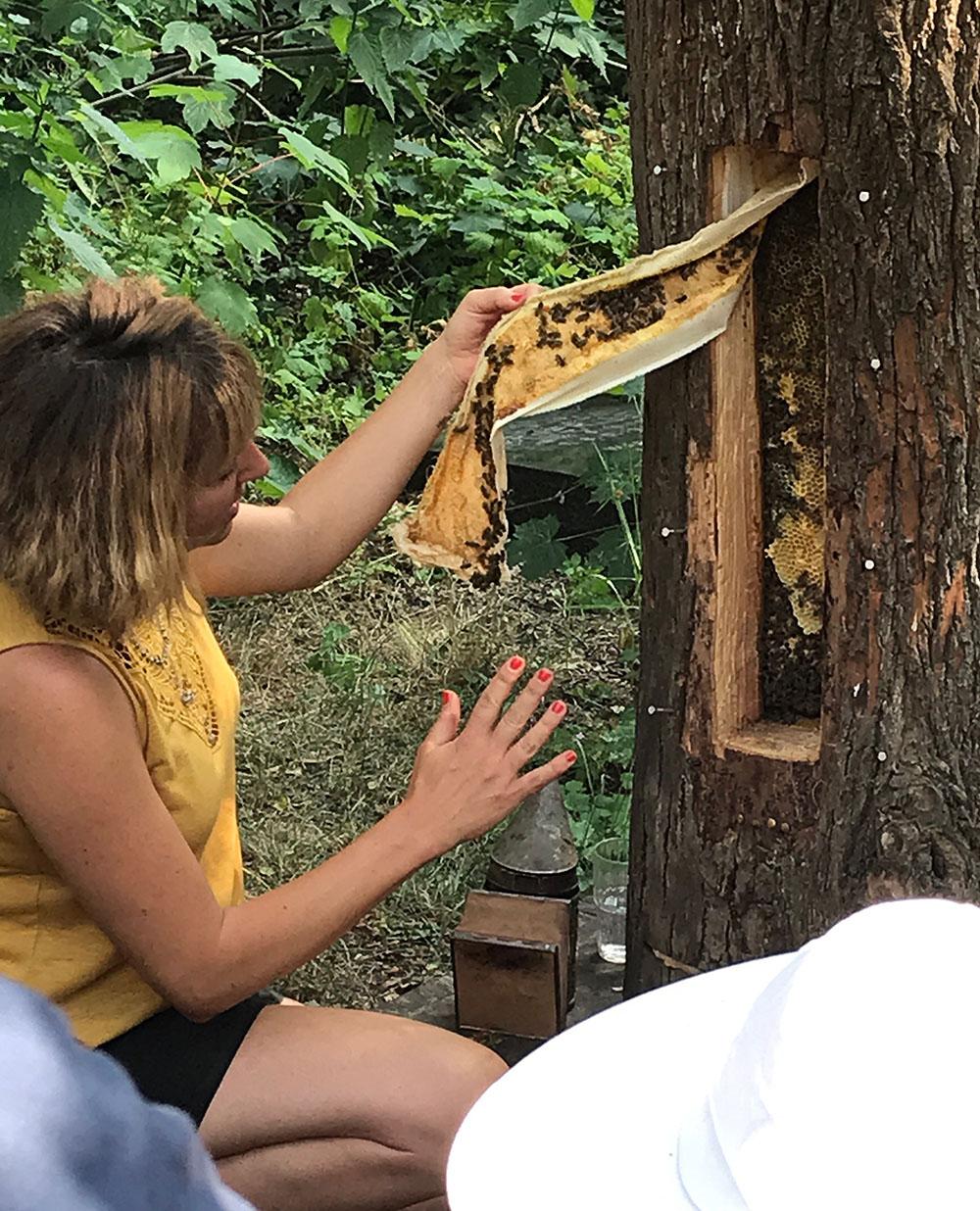 Bienenführung an der Klotzbeute