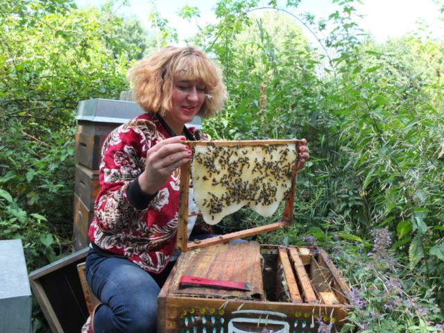 Bienen Frühjahrsdurchsicht