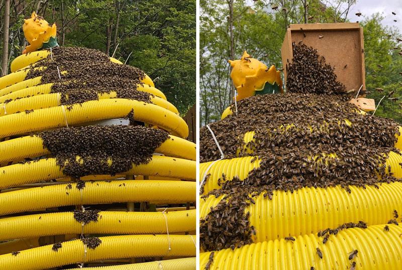 Ein Bienenschwarm auf der gelben Plastikskulptur eines Bienenstockes im Prinzessinnengarten. Er bevorzugt aber dann doch in eine hölzerne Kiste einzuziehen...