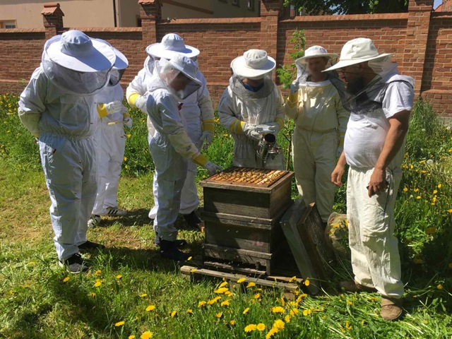"Bienenprojekt ""Summasummarum"" an der Kulturbörse Gnoien"
