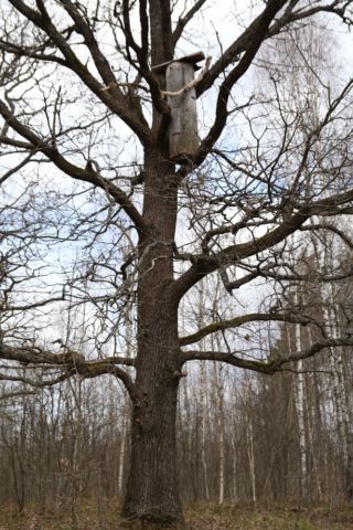 Klotzbeute im Baum