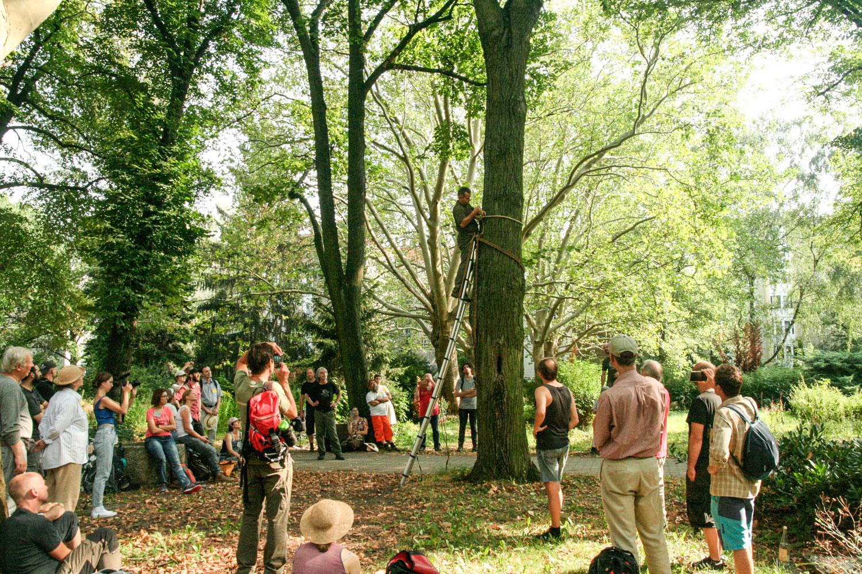 Kletter Demonstration der polnischen Zeidler bei Learning from the Bees Berlin 2019 · Foto: Silke Meyer