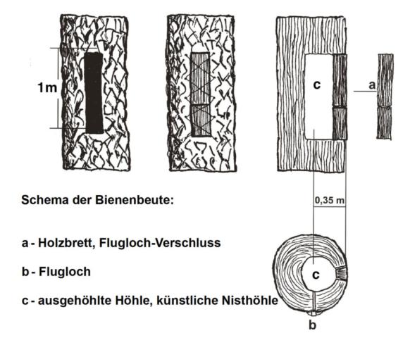 Schema der Bienenbeute / Klotzbeute